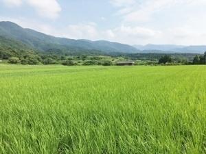 お米生産地.jpg