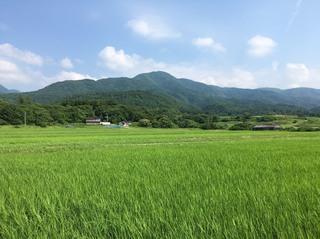 読売 田んぼ写真2.jpg